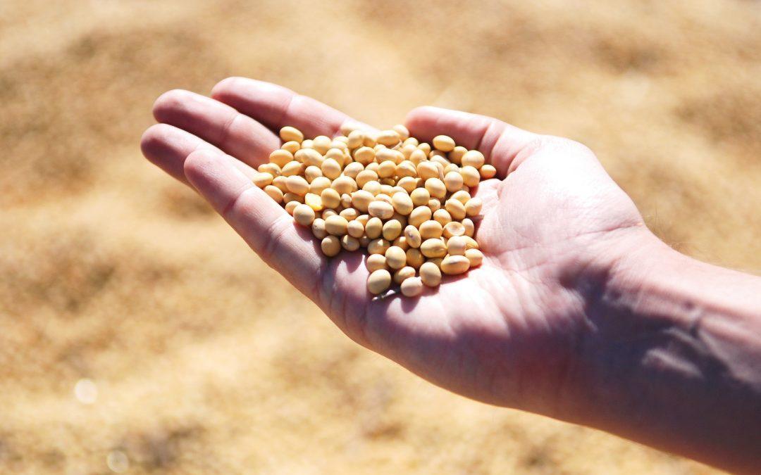 SOJA of SONEE als vervanger voor koemelk